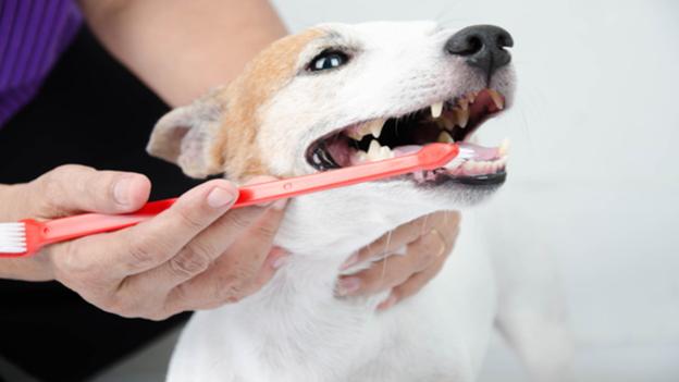 dog dental hygiene tips from custer mcdermott animal hospital in plano texas
